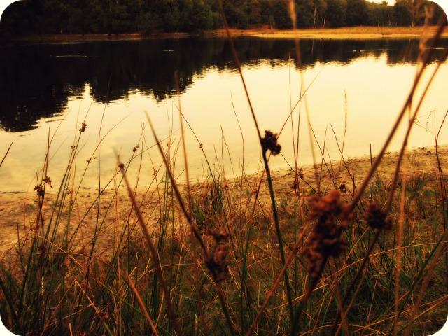 Lake m