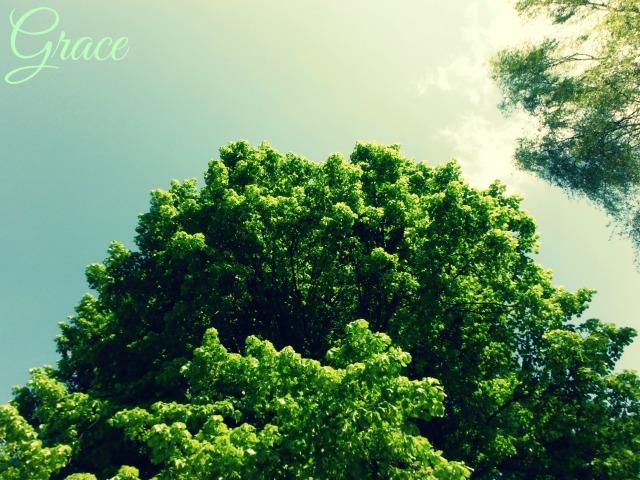 Tree Ploegstr with Grace