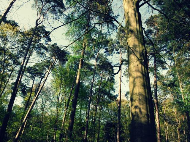 Woods city 2
