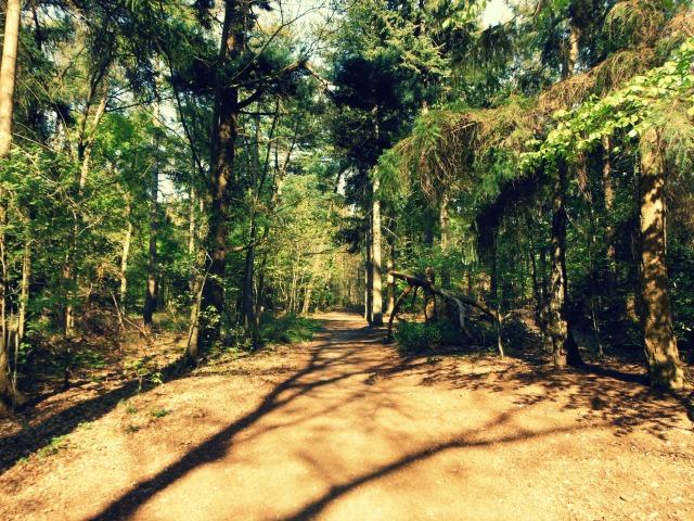 Woods city 3